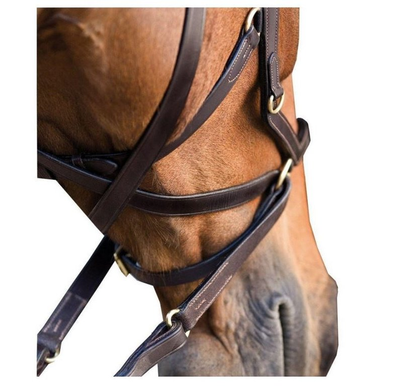 ... addition, damage of the mouth can be avoided by biting, your horse