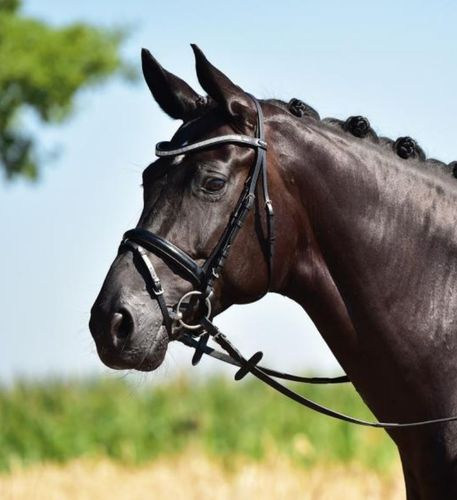 BUSSE Bridle Glamour Crystal-Varnish