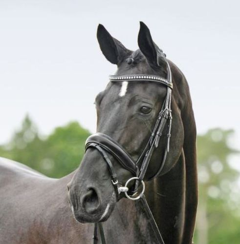 High-Quality Bridle STUTTGART by BUSSE / SOLIBEL