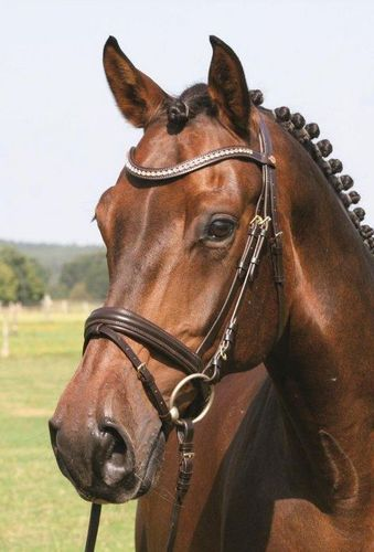 HANS MELZER bridle MECHTERSEN brown/golden